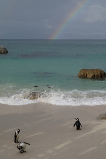 Pinguins at Boulders Beach