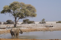 Getting a drink at the waterhole
