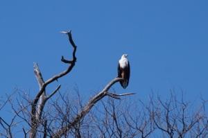 Okavango Delta (1)