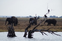 River Safari @ Chobe NP
